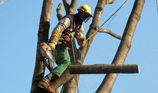 abattage d 39 arbres demandez des devis aux lagueurs pour vos travaux d 39 abattage. Black Bedroom Furniture Sets. Home Design Ideas