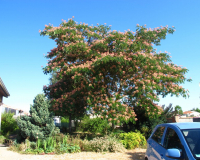 30 superbes arbres issus des jardins des membres